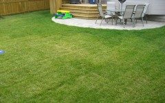Sod back yard