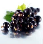 Black Currant U-Pick information page.  Click here.
