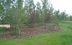 Large mulch areas