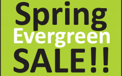 Spring Evergreen Sale featured image link