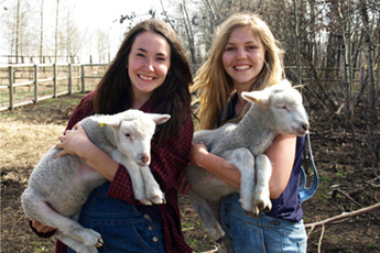 SAP Slider Girls & Lambs